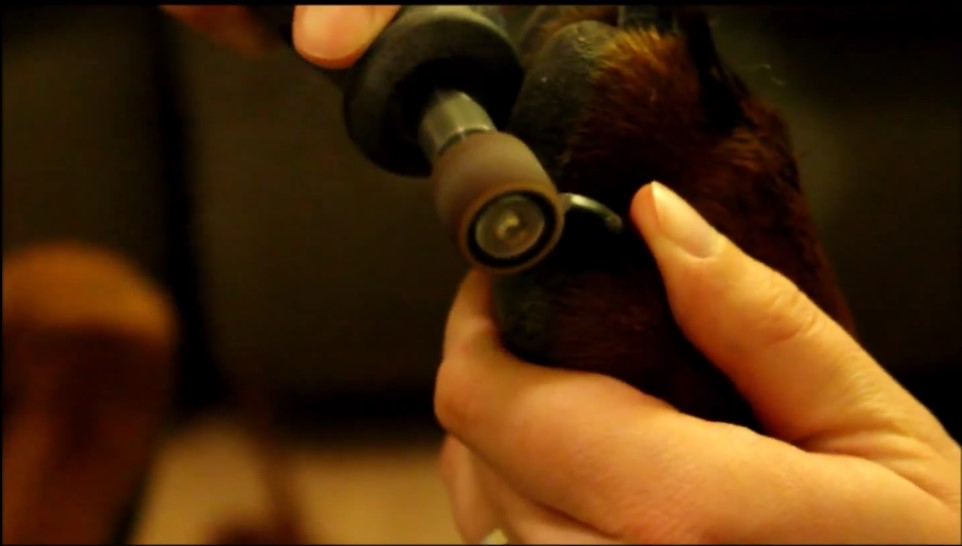 Using a nail grinder on your pet