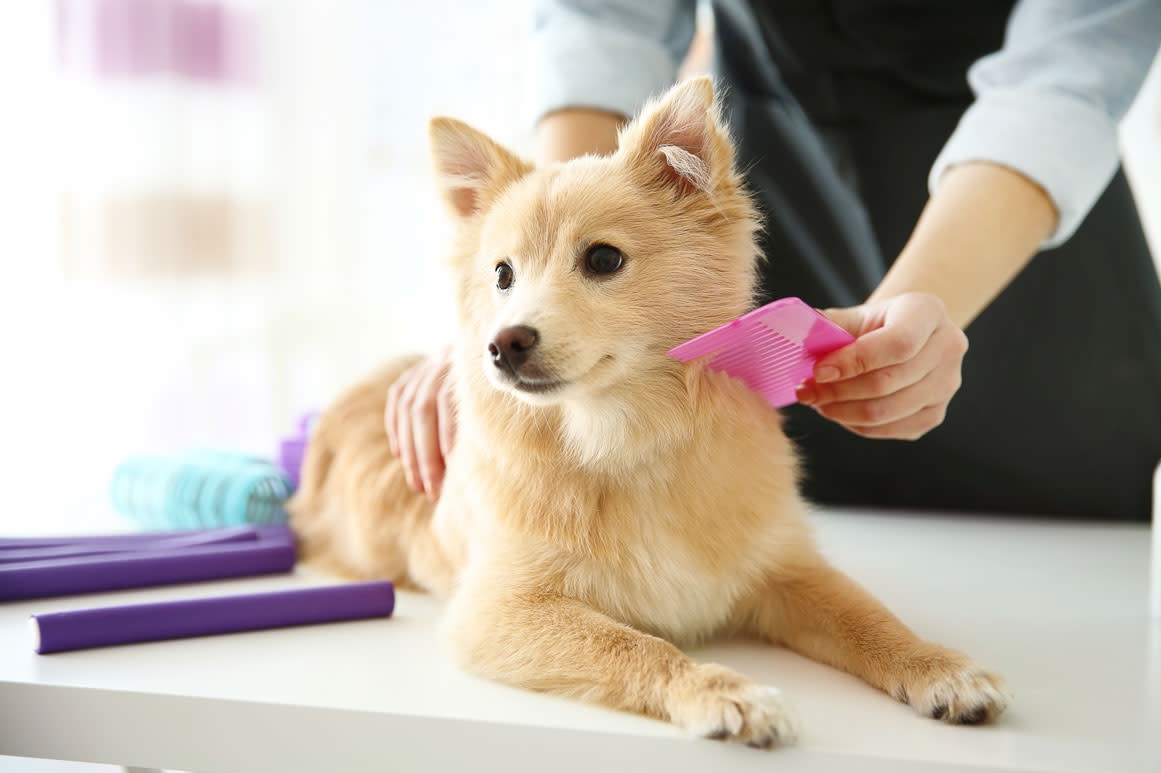 Grooming our dog