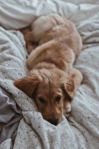 Dog lying on bed.