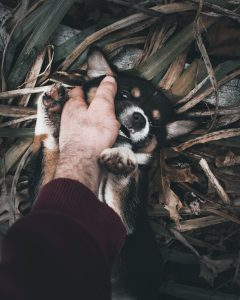 Puppy biting a hand.