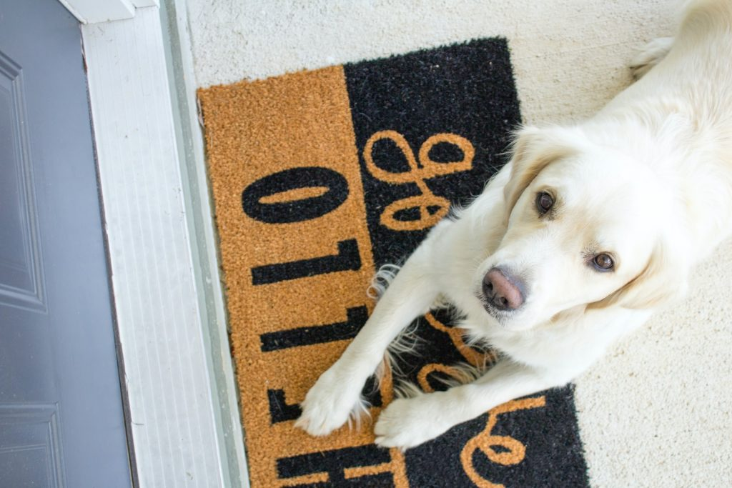 Dog on a welcome mat.