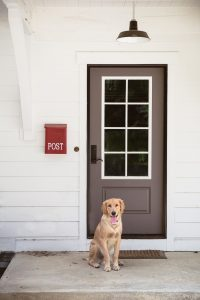 Dog standing outside by a door.
