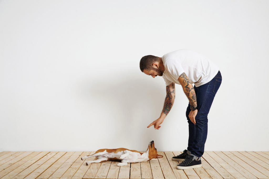 Man teaching dog to roll over.