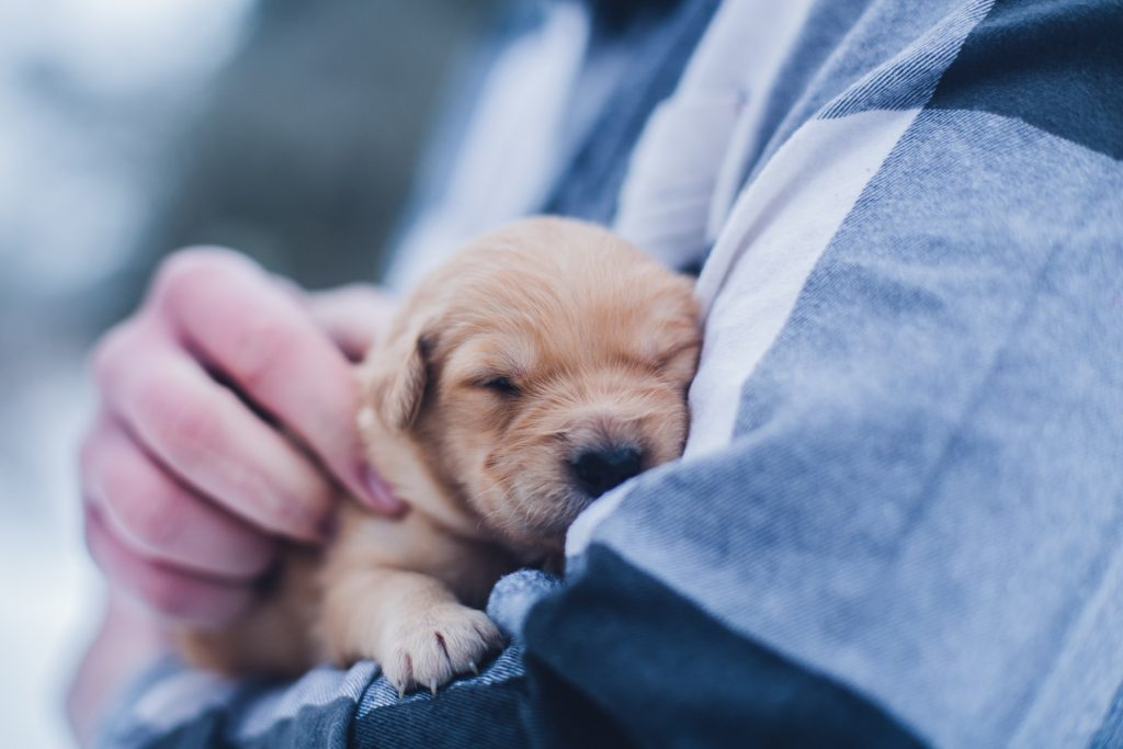 Little puppy in person's arms.