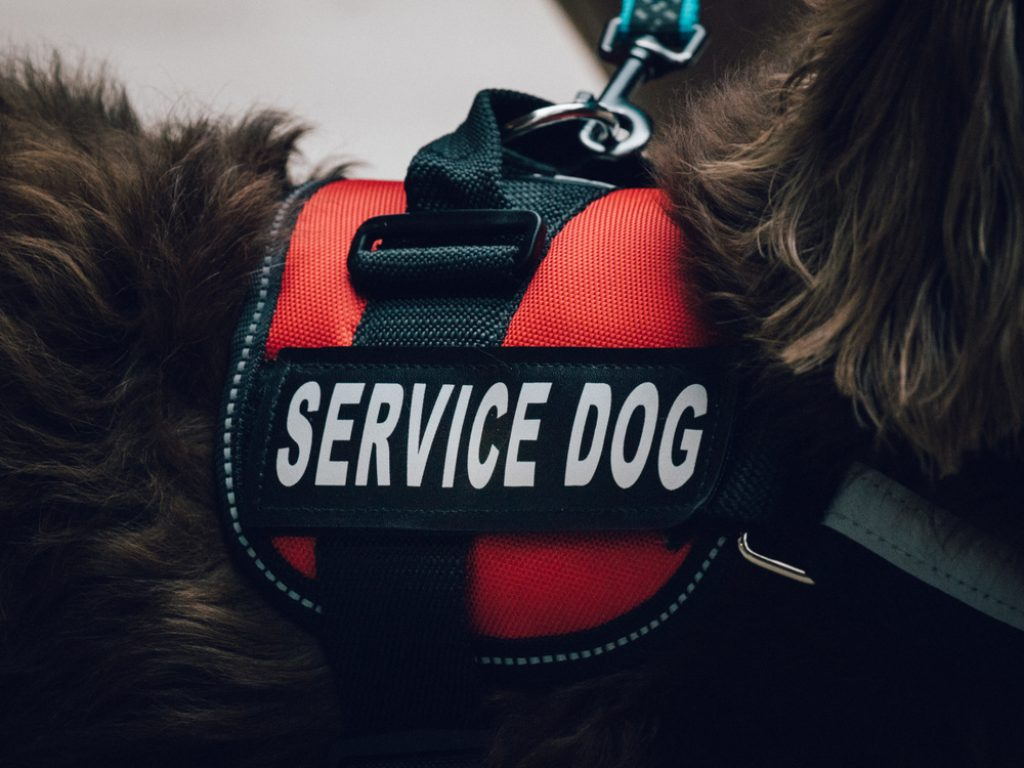 Service dog vest.