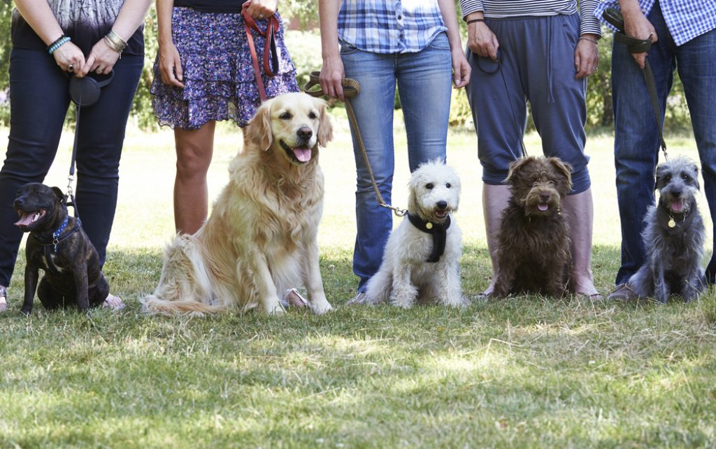 Group of dogs at training school.