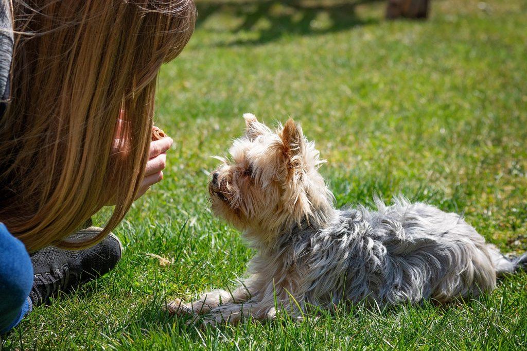 Woman training a dog.