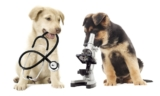 How to treat your dog's Pneumonia