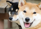 Health Concerns for 5 Popular Dog Breeds