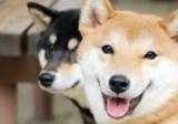 Health Concerns for 5 Popular Dog Breeds