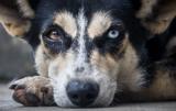 How to treat your dog's Retinal Hemorrhage