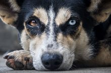 How to treat your dog's Retinal Hemorrhage