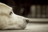 Calming Canine Stress and Anxiety