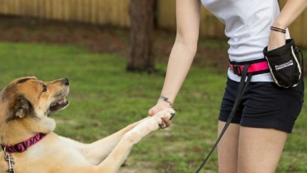 Pet training: What Does Dog Training Guides Include?