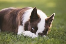 How to prevent flea and tick bites naturally