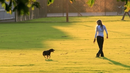 Walking Your Dog As The Last Step In Training The Dog