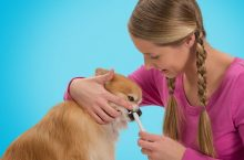More tips about brushing your dog's teeth