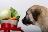 Study Reveals that Dogs can go Vegetarian