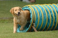 Agility Training: What is it and is it right for your dog