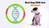 Best Dog DNA Test Reviews 2020