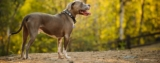 How to treat your dog's Bladder Infection