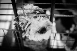 How To Deal With A Dog Whining In His Crate