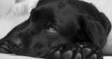 Seven important facts to diagnose diseases on dogs.