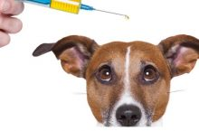 How to Manage Your Dog's Diabetes