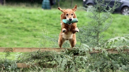 How would you test your dog's compliance while training the dog?