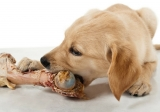 FDA Warns Bones are Unsafe for Dogs