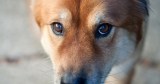 How to treat your dog's Glaucoma
