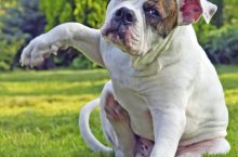 How to treat your dog's hot spots