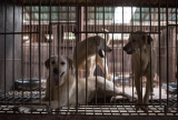 Will China Ban Dog Meat?