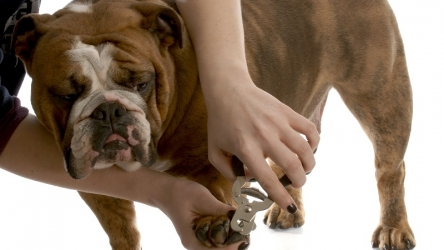 Dog paw care