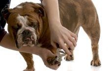 Dog paw care