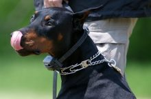 Dog training collars – Which one is correct for you