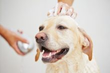 How to clean your dog's face