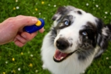 Clicker Training Your Pet