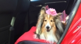 15 Dog-Friendly Travel Tips