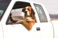 On the Road With Your Pooch: Car Travel Risks and Safety