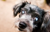 How to care for your dog's cataract