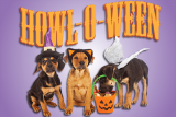 Tips for a spectacular Halloween with your dog.