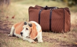 4 Tips for Smarter Travel With Your Dog