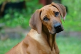 How to treat your dog's throat cancer