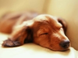 Dog Sleeping Patterns and how to optimise them