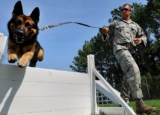 Introducing The Correction As The Second step In Training The Dog