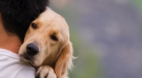 How to treat your dog's Seizure