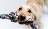 Fun indoor activities for your pup