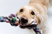 Fun indoor activities for your pup