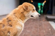 How to treat your dog's mange